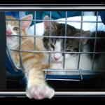 Jailbreak iPod Touch 3G и iPod Touch 2G (MC). Когда?
